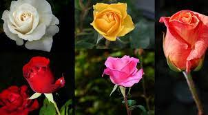 Top 7 Flowers in India - You Should Know About Them