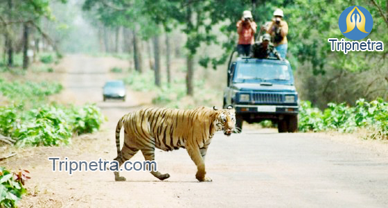 Tadoba National Park Jeep Safari Prices- Resorts Near Tadoba Park