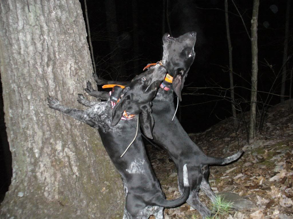 The danger of staying late in the forest during hunting